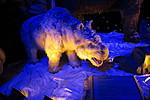 Динозавры на ВДНХ